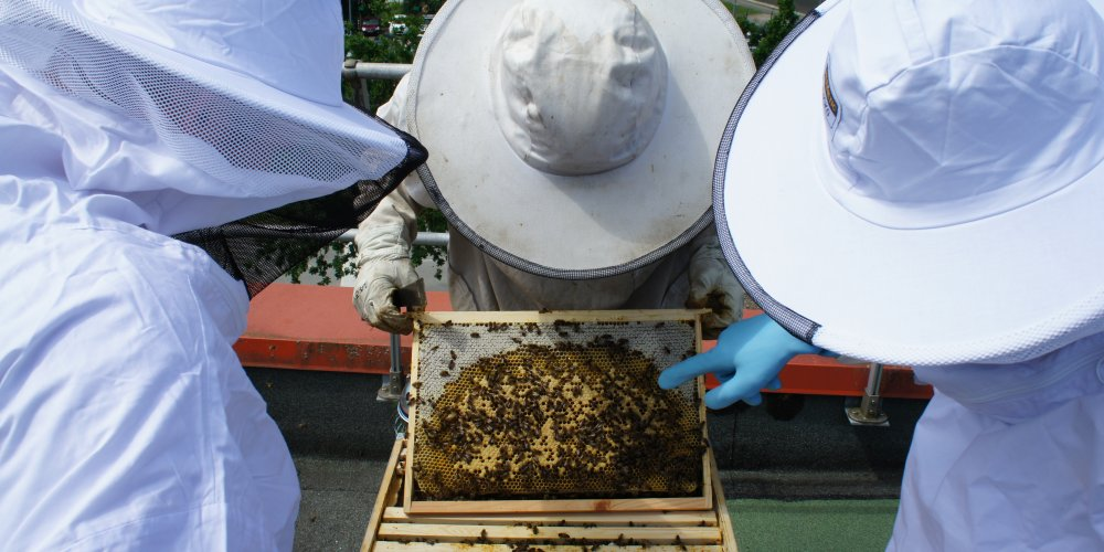 Bee workshop at delta plus systems